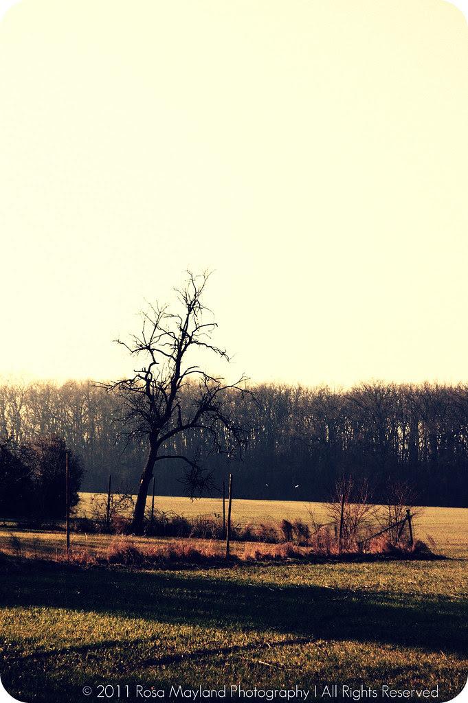 Spring Landscape 1.1 bis