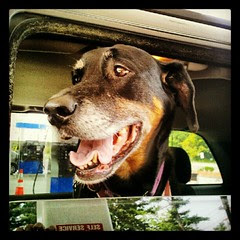 Lola and I are off for a fun filled day! #dogs #happydog #summer #carride #dogstagram #petstagram #instadog