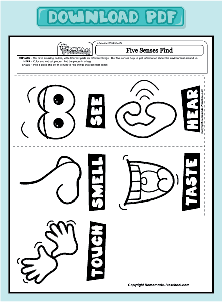 five sense worksheet new 497 five senses preschool math. Black Bedroom Furniture Sets. Home Design Ideas