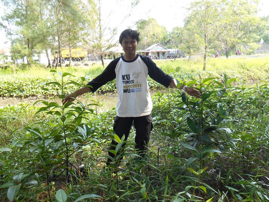 Riki memegang mangrove jenis Rhizopora apiculata (kanan) dan Bruguiera gymnorrhiza (kiri) yang ditanam di Kelurahan Pondok Besi, Kota Bengkulu. Foto: Dedek Hendry
