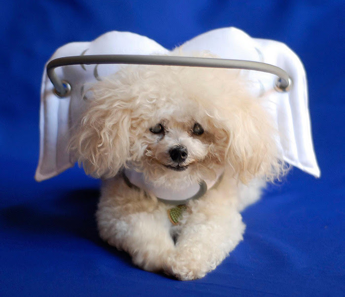 blind-dog-safety-device-muffins-halo-3