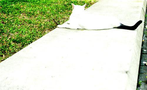 Paved White