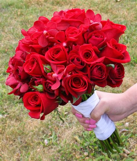 gambar foto bunga mawar merah ayeeycom