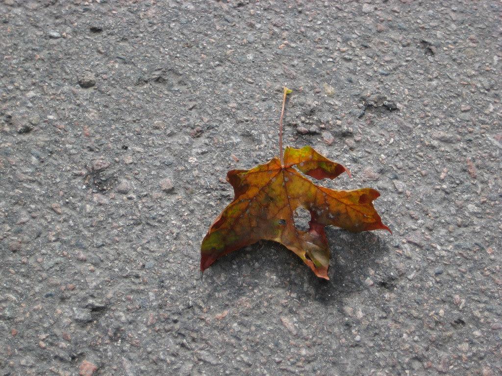 Otoño sobre asfalto