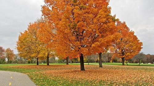 Fallen leaves by ellenm1