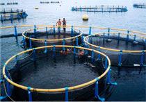 granja marina piscicola