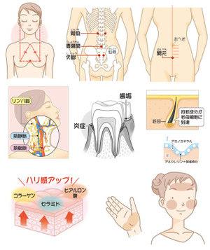川野郁代のイラストファイル 女性誌向け医学イラスト2