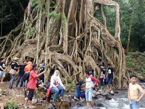 satu  mojokerto punya pohon akar seribu  indah