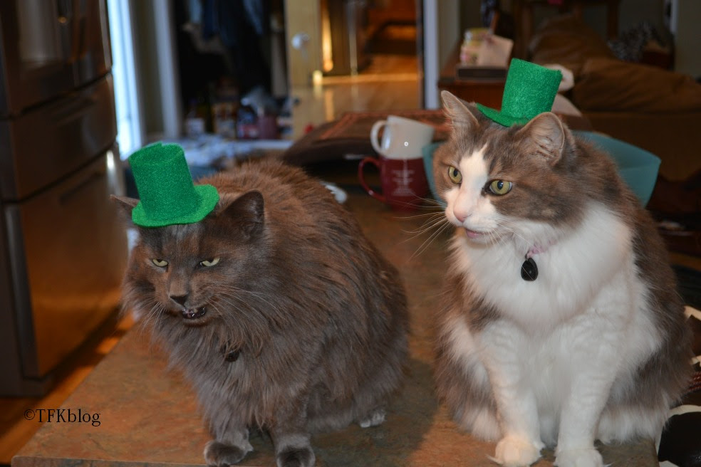 Muffin and Jack in a St. Patrick hats