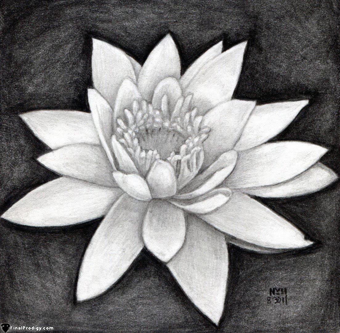 Water Lily Stencil Black And White: Dongetrabi: Black And White Shaded Flower Drawing Images