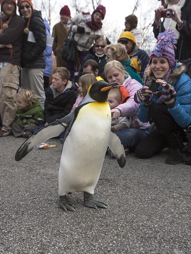 Penguin Parade 3