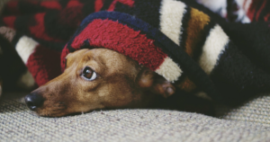 9 Tips To Keep Your Dog Calm And Safe This 4th Of July