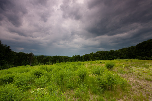 storm clouds gathering above a green field