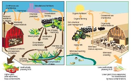 Intensively managed agriculture (left) compared with organic farming (right). (Reproduced by permission of The Gale Group.)