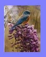 Día Mundial de las aves