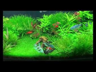 Akwarium roślinne bez co2 dwa dni