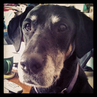 """what are you eating Mama? I haz sum?"" #dogstagram"