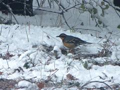 birds foraging
