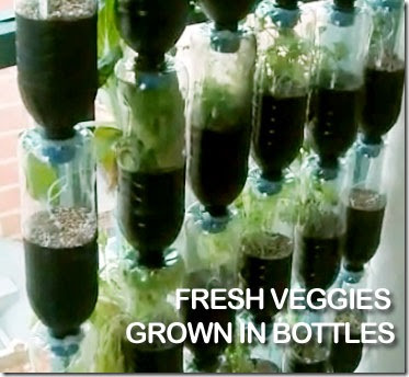 Recycled Plastic Bottles to Awesome Vertical Vegetable Garden