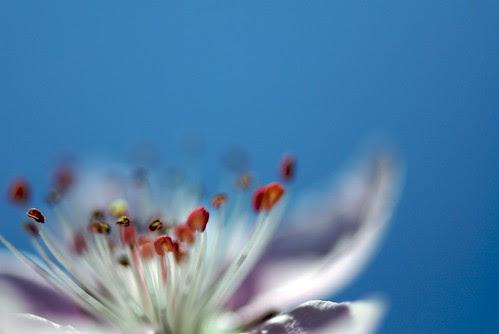 Blue/Blur (by da100fotos)