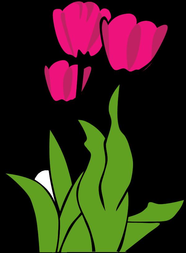 Gambar Bunga Tulip Animasi Hitam Putih Mawar Ku