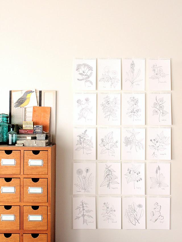 Drawing herbs