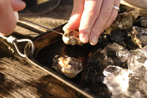 shucking oysters on the beach