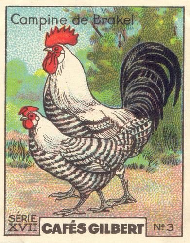 gilbert poules 3