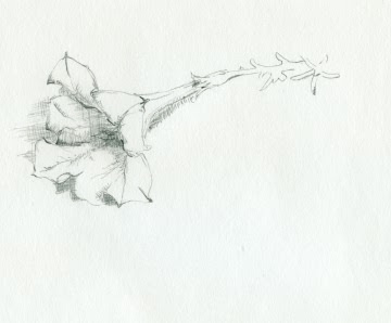 drawing of a flower for 1.618