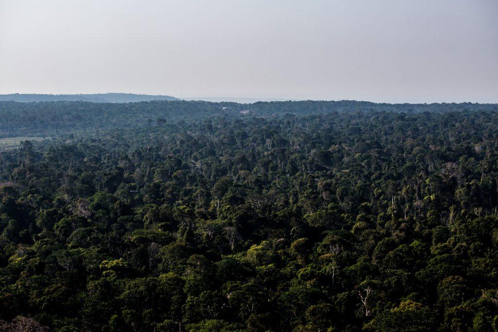 A Floresta Nacional de Tapajós do alto, que é uma das mais antigas do país com plano de manejo. Foto: Flávio Forner/InfoAmazonia