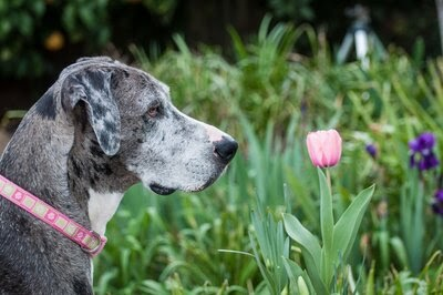 Plants To Remove From Your Dog's Yard