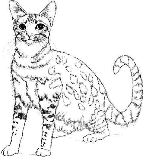big cat coloring pages  getcoloringscom