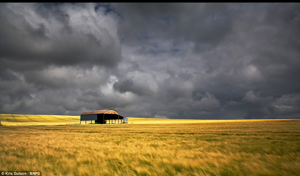 Home Counties: A storm brews over a field of barley in Wiltshire close to Sixpenny Handley in a dramatic image caught by photographer Kris Dutson who has spent a decade capturing these images