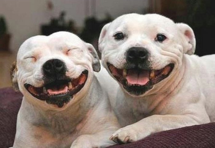 happiest_dogs_on_the_internet_18 (700x483, 97Kb)