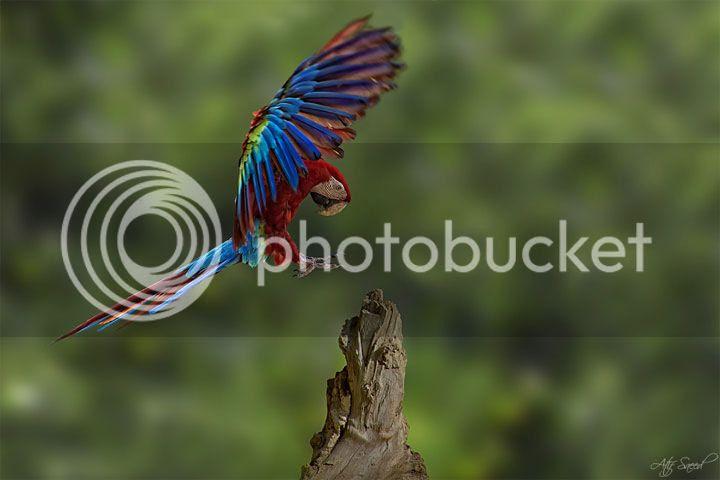 photo M-Atif-Saeed-4_zps7d98c694.jpg