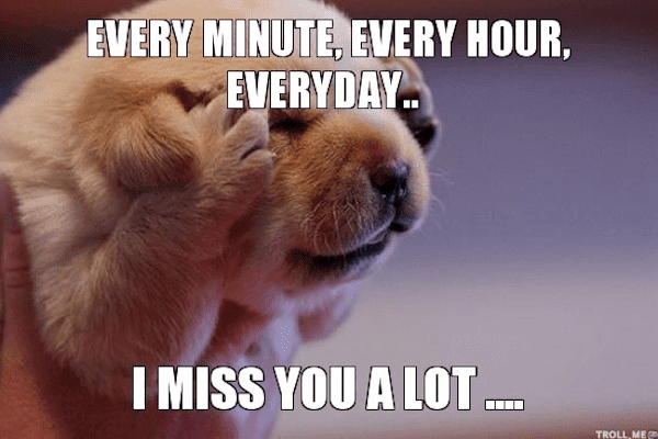 17 Of The Best I Miss You Memes Top Mobile Trends