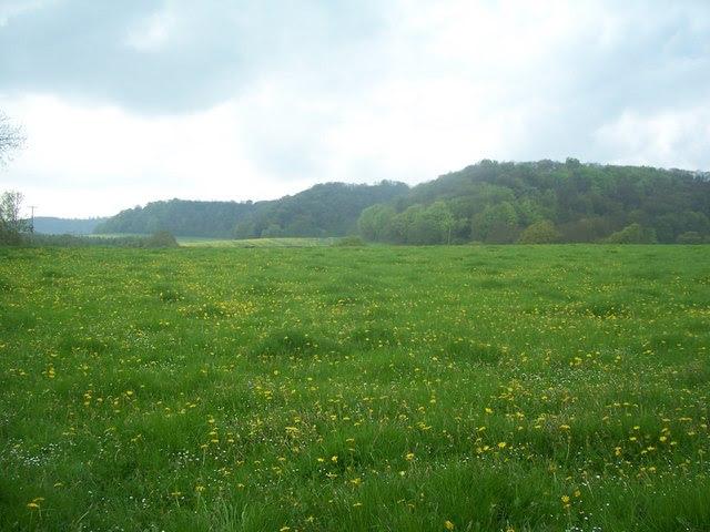 File:Hawkley Hanger, from footpath at Vann Farm, Empshott - geograph.org.uk - 165919.jpg