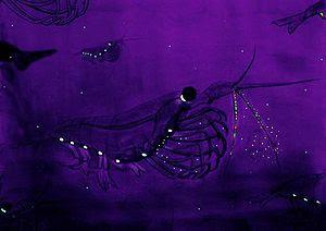 Bioluminescencekils.jpg
