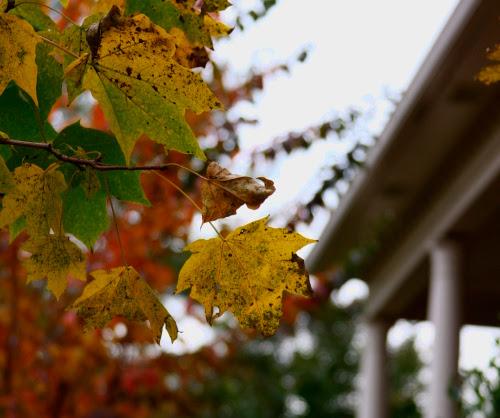 fall.corners