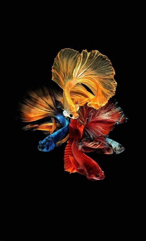 pin oleh ans iqbal iqbal  ikan ikan lukisan abstrak ikan akuarium