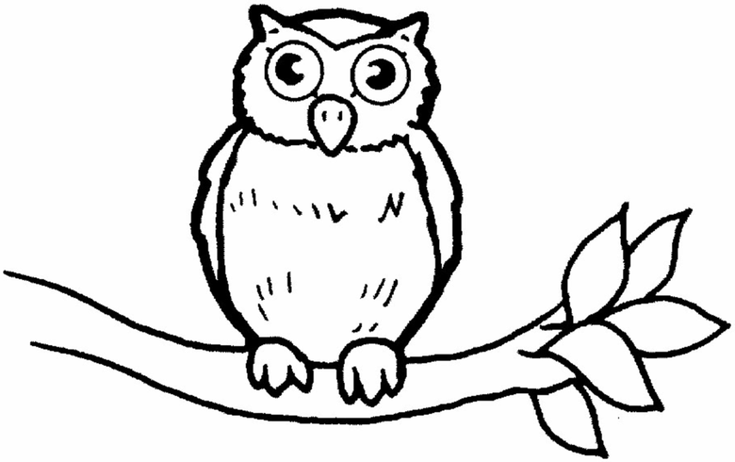 Printable Owl Coloring Pages For Kids - Drawing With Crayons