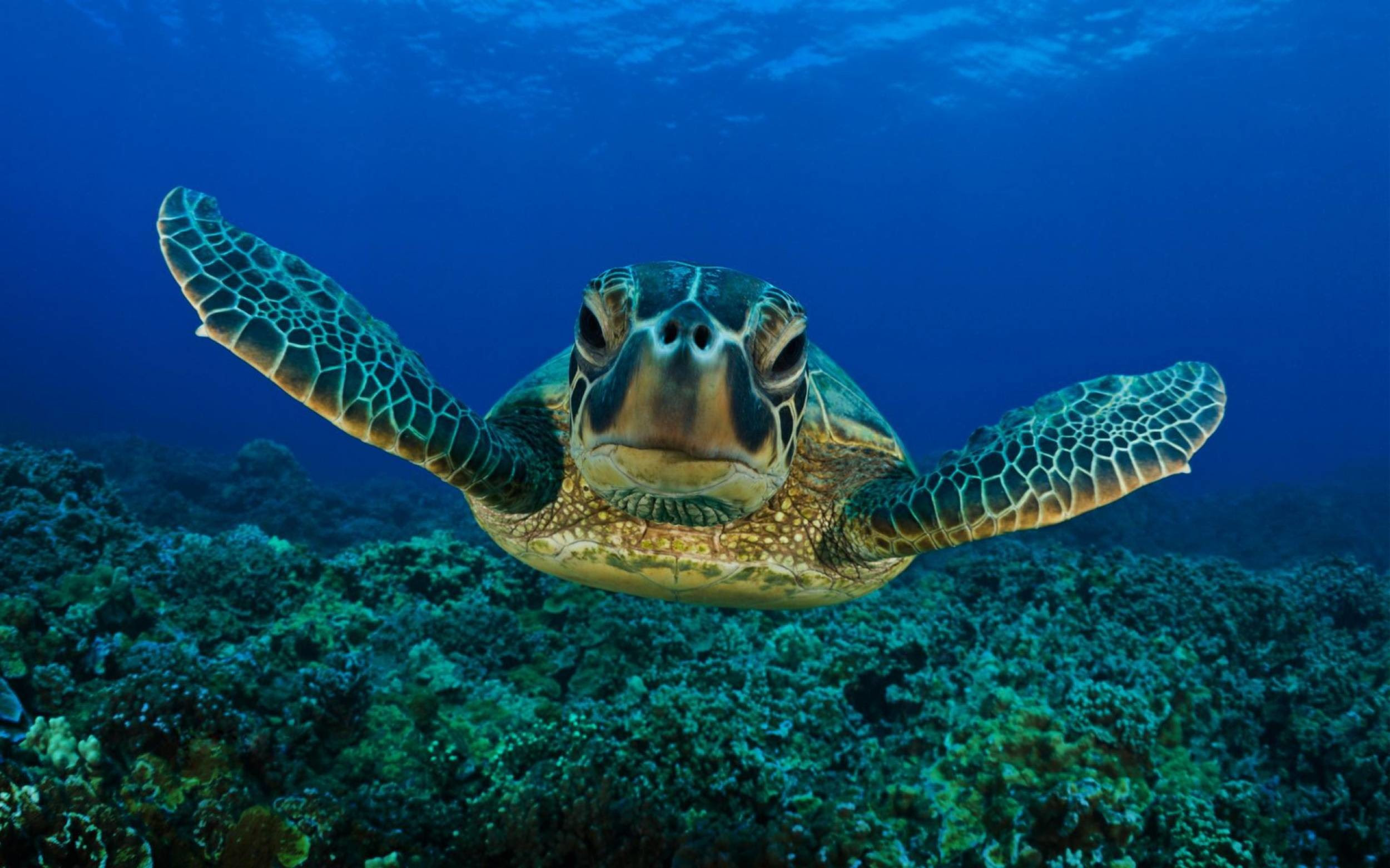 Turtle Wallpapers 73 Background Pictures