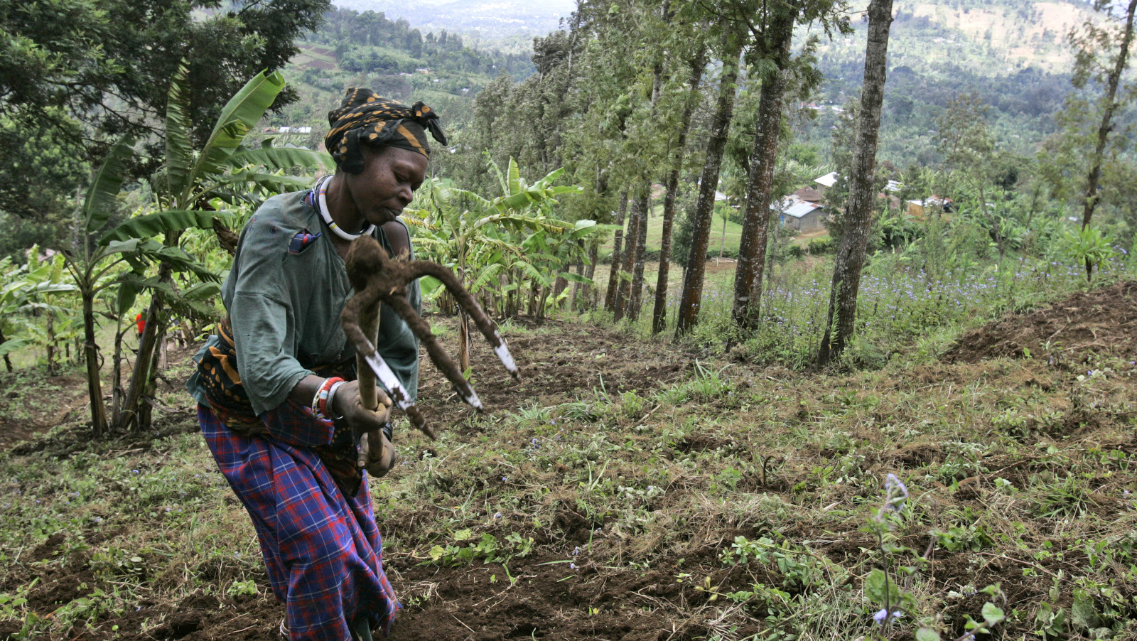 A woman works a field near the Tanzanian town of Arusha. (AP/Karel Prinsloo)