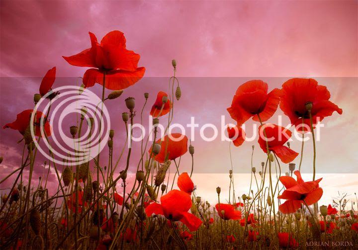photo Adrian-Borda-5_zpsubprzkjp.jpg