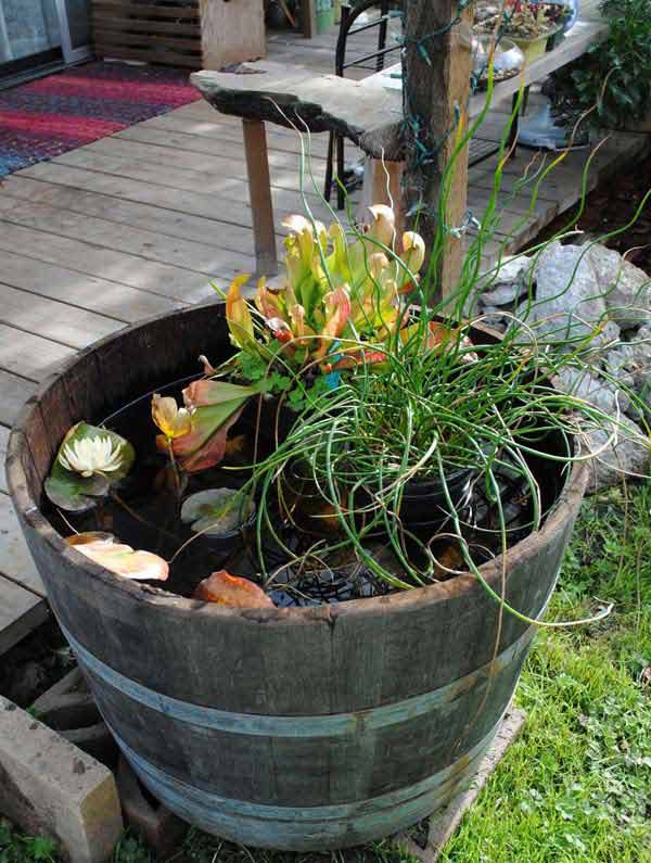 AD-Mini-Pond-In-A-Pot-2