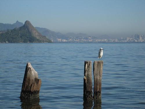 shore bird and Rio