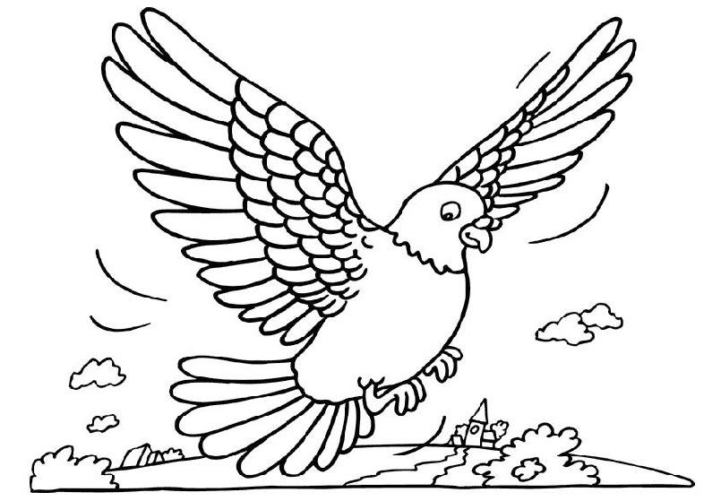 Mewarnai Burung Dara Merpati Gif Gambar Animasi Animasi