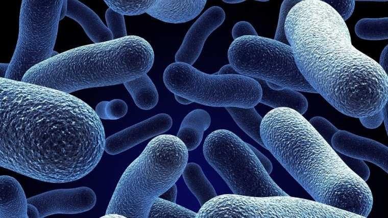 La colistina es el antibiótico de último recurso para los tipos particularmente peligrosos de superbacterias.