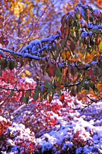 autumn snow 2