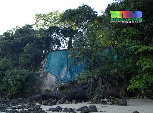 A landslide on a natural rocky shore